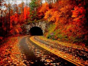 -Autumn-autumn-32320326-800-600