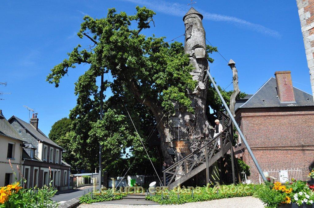 Stejarul capela