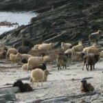 Alte detalii scoţiene. Despre Orkney şi Shetland