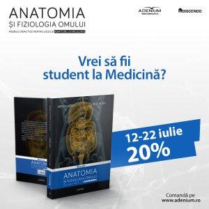 anatomia 20%